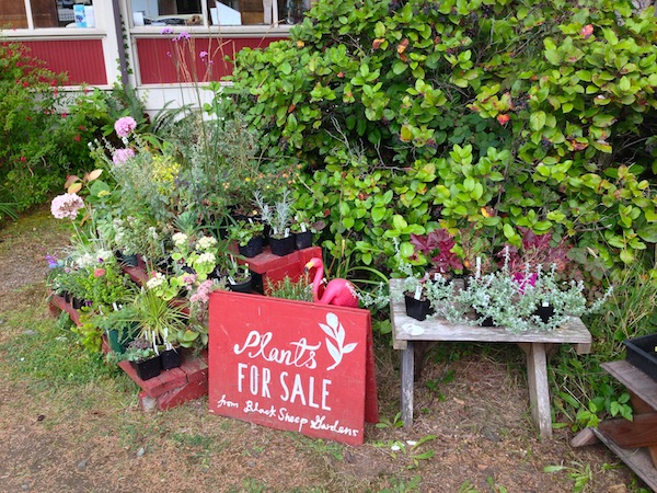plants for sale souwester