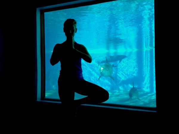yoga among dophins las vegas
