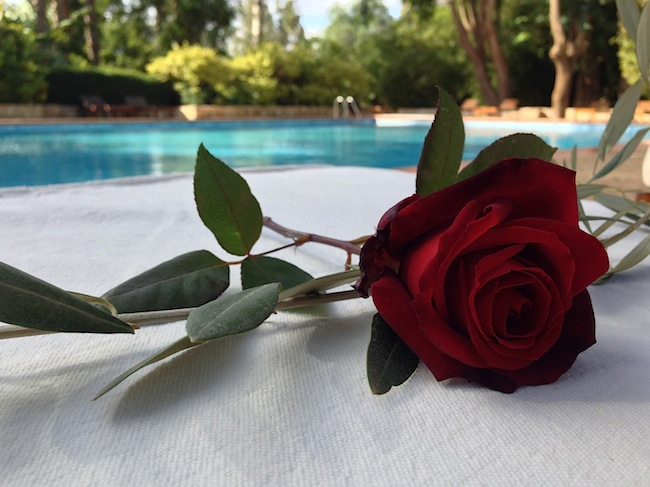 Fresh roses by the pool