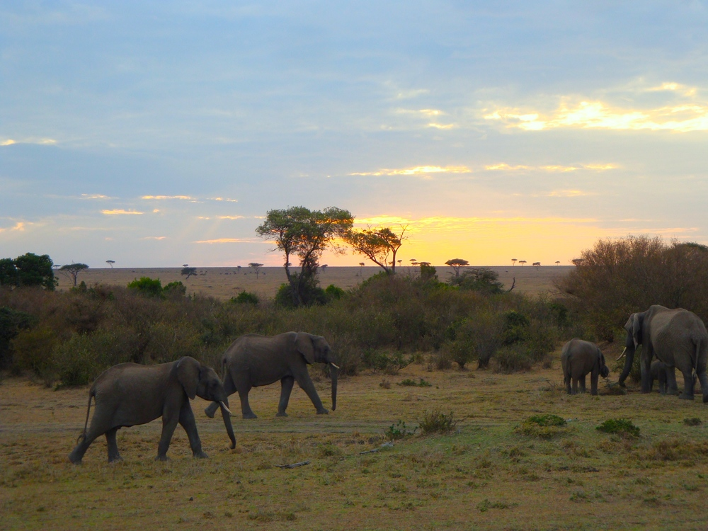 ElephantsMasaiMara