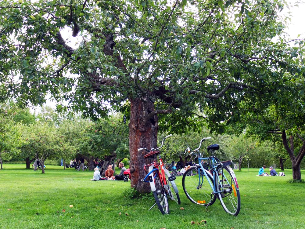 Fika in the orchard at Rosendals Trädgård