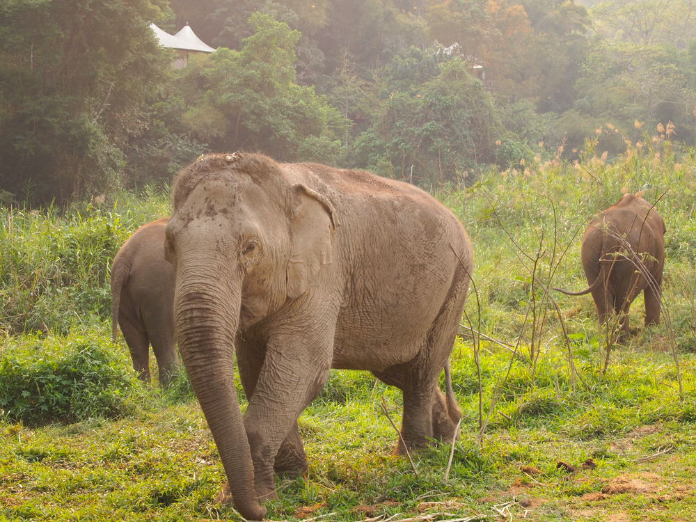 Thailand. Elephant-trekking and glamping where Thailand meets Laos and Myanmar at the  Four Seasons Tented Camp Golden Triangle .