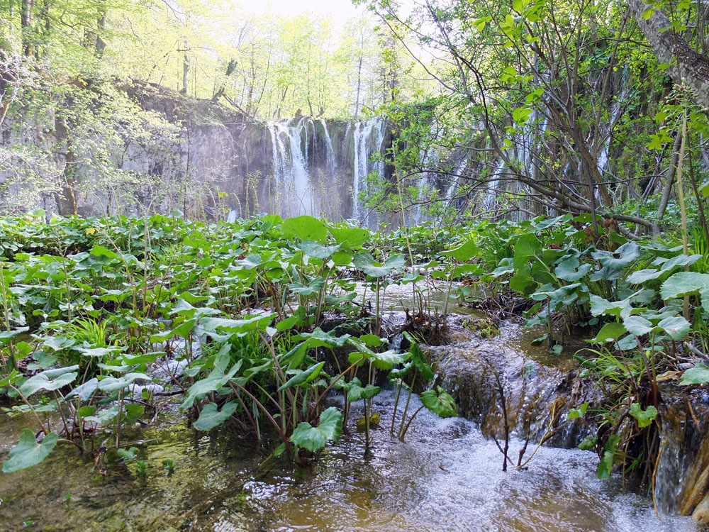 It's hard to believe that in 1991, the first shots of the Croatia-Yugoslavia war were fired in Plitvice. The Serbs controlled the park until 1995, which allowed the ecosystem to recover from years of visitors prior to the war.