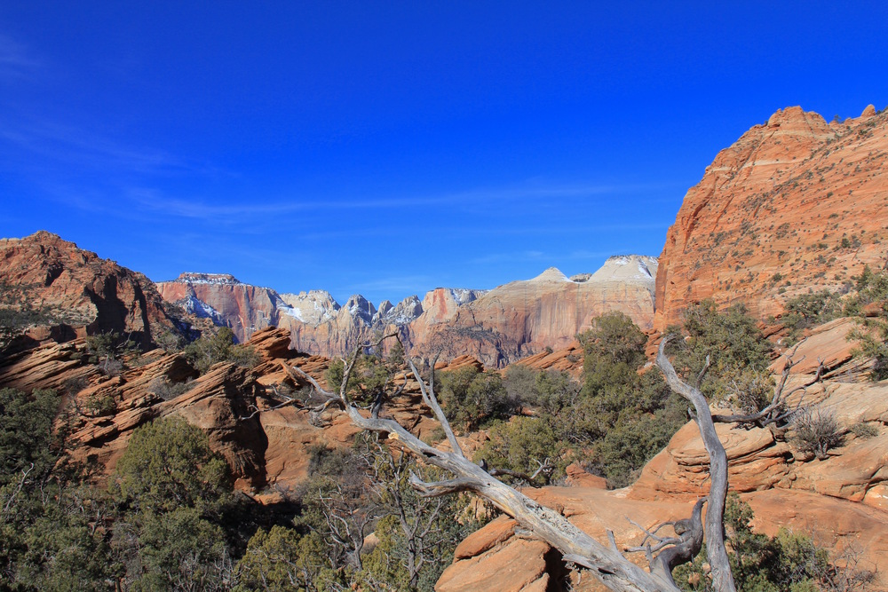 One of our best hikes: The short and sweet Canyon Overlook Trail, a 45-minute rock-hopping jaunt to a views-for-miles summit {pictured below}.