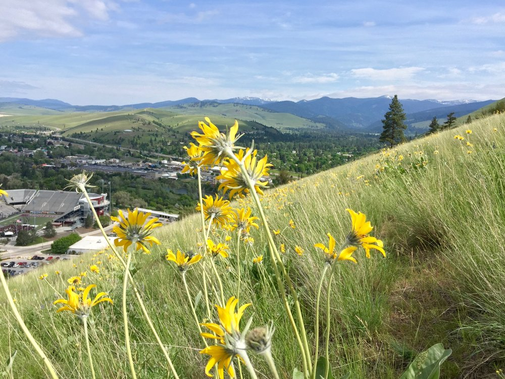 "Wildflowers and views for miles while hiking to the M {see the tiny ""M"" in the background of the previous photo} etched into Mount Sentinel."