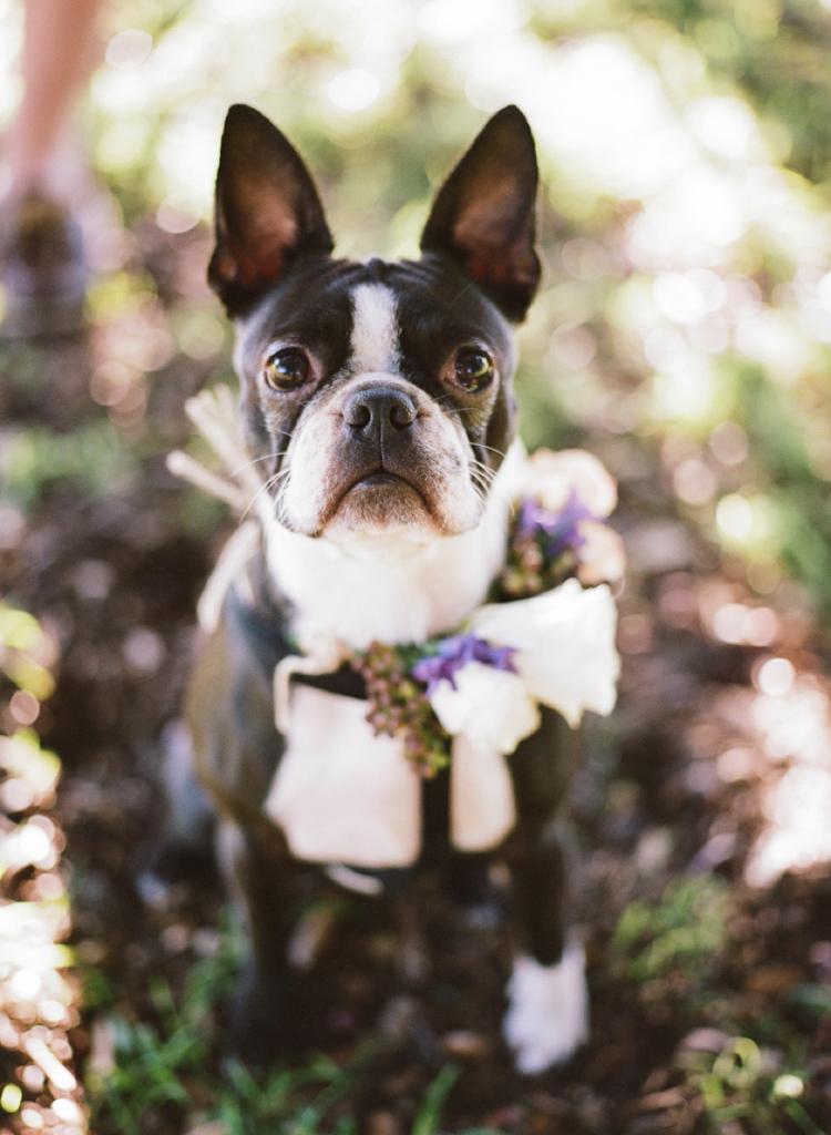 Mr-Edwards-Photography-Sydney-wedding-Photographer_1393.jpg