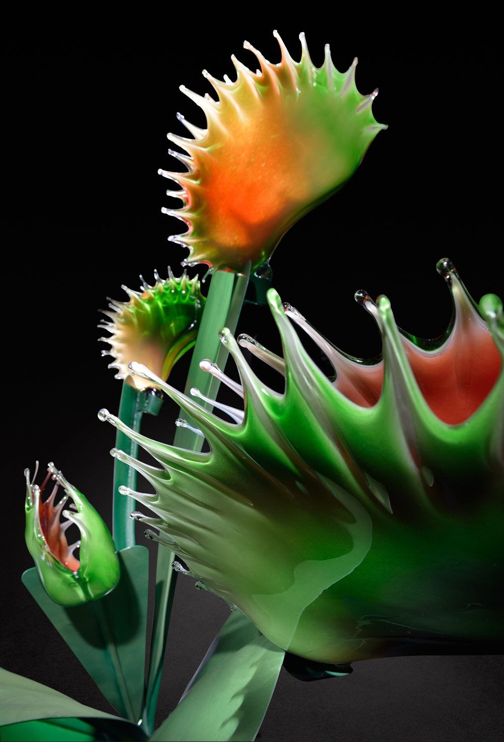 Carnivorous II detail 2013 Glass and Steel copy.jpg