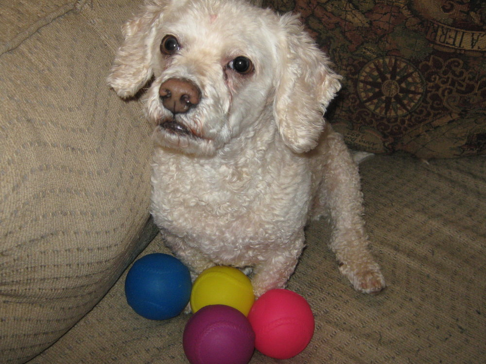 How I remember Benji: surrounded by his favorite toys.