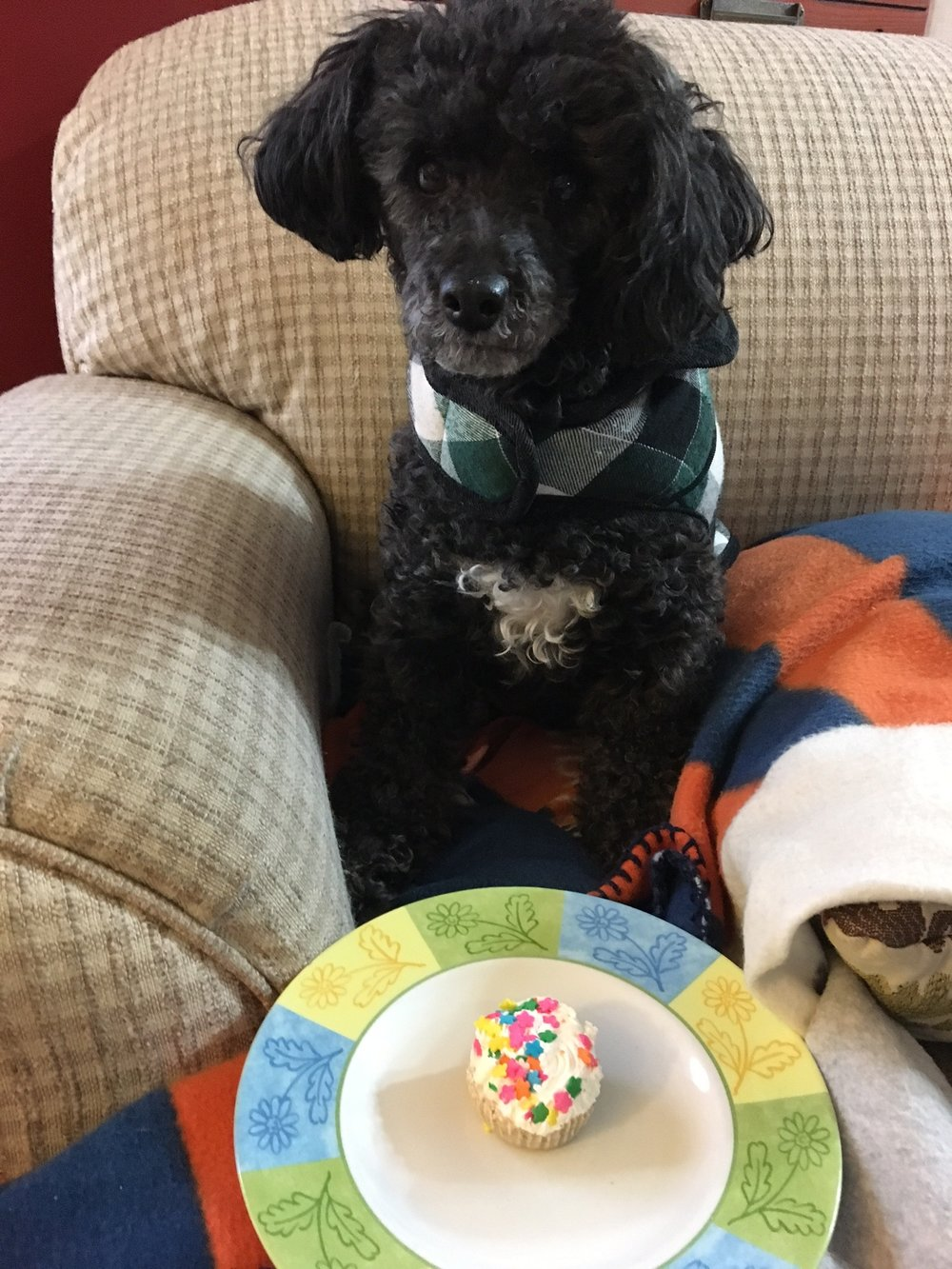 "Duncan wasn't sure what to make of his celebratory ""pup-cake."""