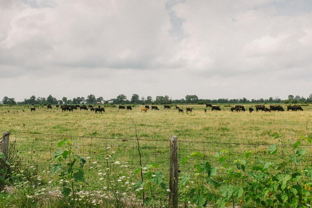 caudle-williams-steers-1.jpg