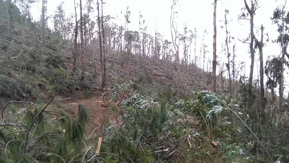 Kula Forest Reserve devastation