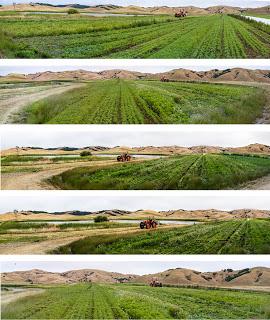tractor+options.jpg