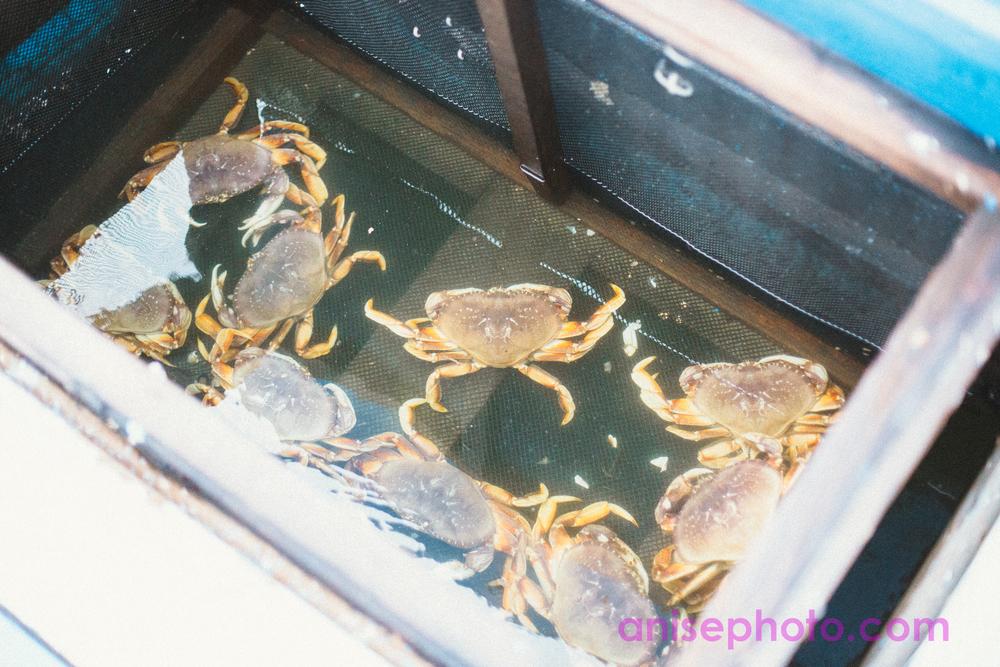 crabfeed-2.jpg