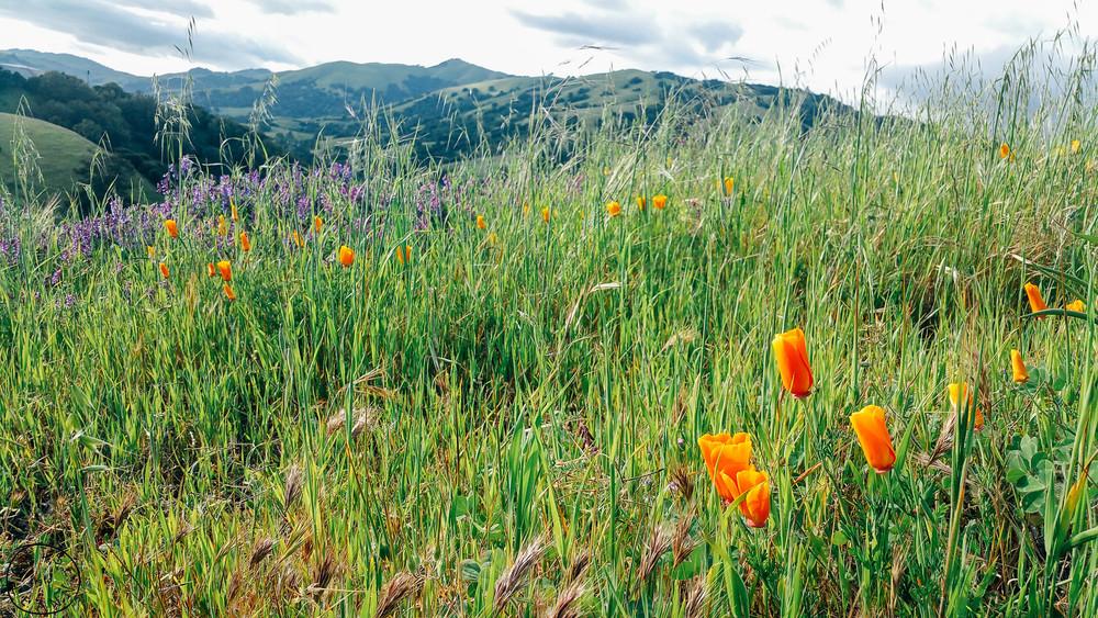 Springtime Marin County  Green hills Marin  Terra Linda Photographer  Marin Photographer