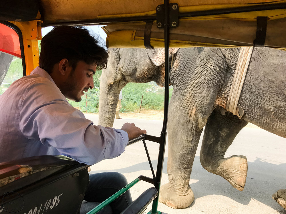 India-Jaipur-Day2-9.jpg