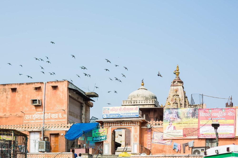 India-Jaipur-Day2-21.jpg