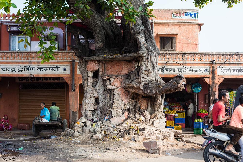 India-Jaipur-Day2-22.jpg