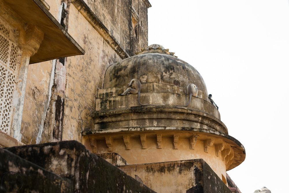 India-Jaipur-Day2-67.jpg