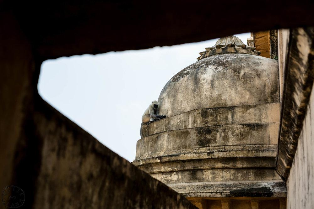 India-Jaipur-Day2-72.jpg