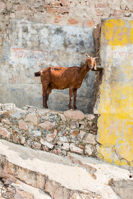 India-Jaipur-Day2-97.jpg
