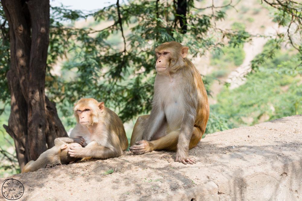 India-Jaipur-Day2-101.jpg