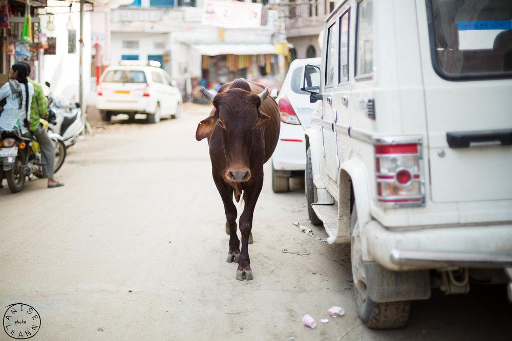 India-Pushkar-4.jpg