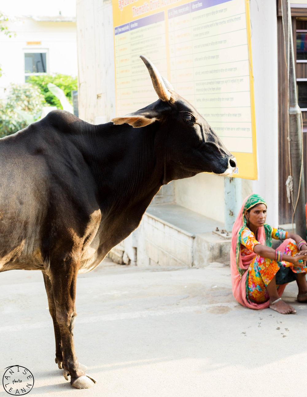 India-Pushkar-11.jpg