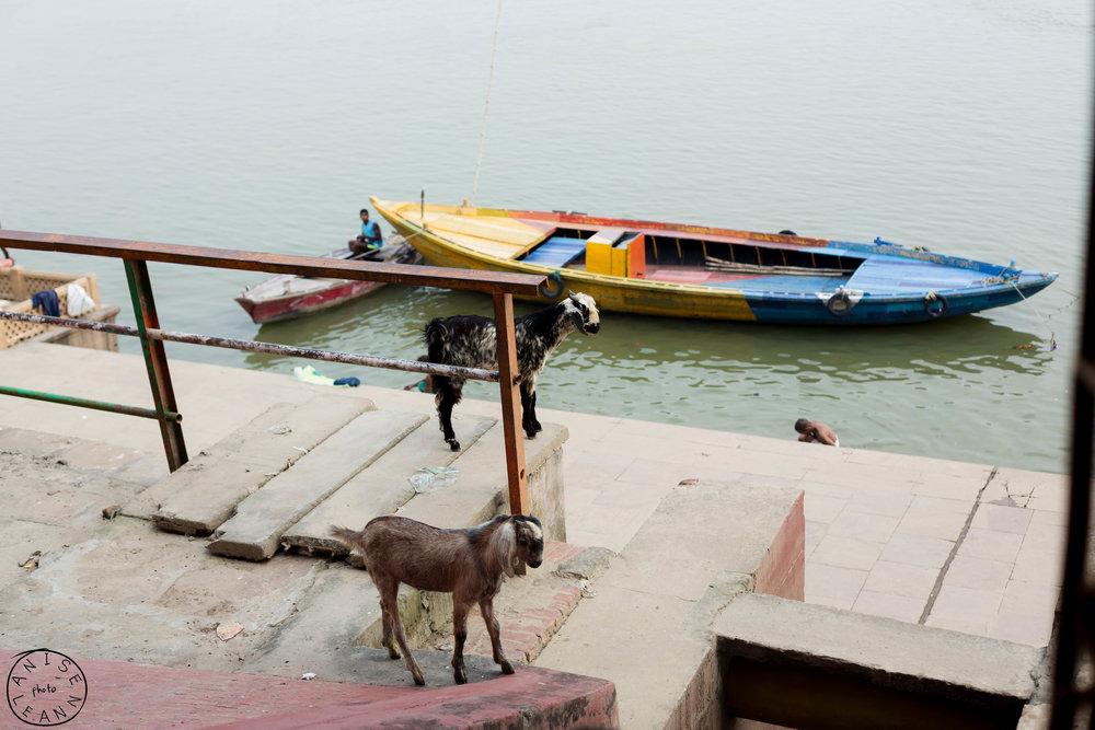 India-Varanasi-8.jpg