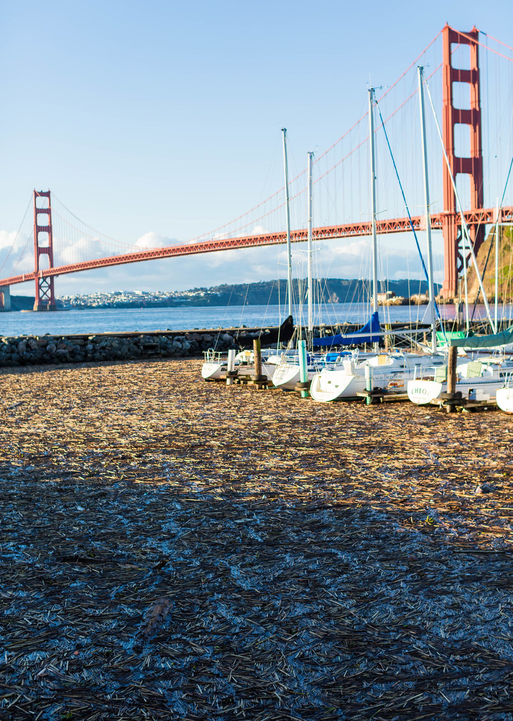 Debris fills Presidio Yacht Club Marina, just north of Golden Gate Bridge, Thursday morning.