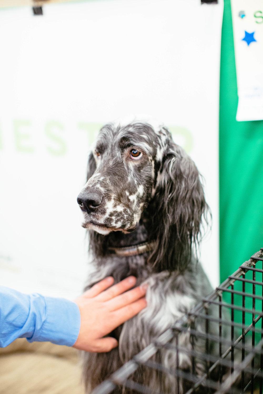 Dog Show SF-97.jpg