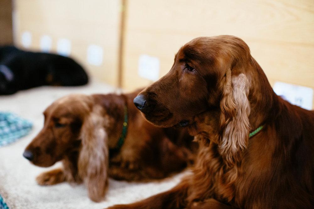 Dog Show SF-41.jpg