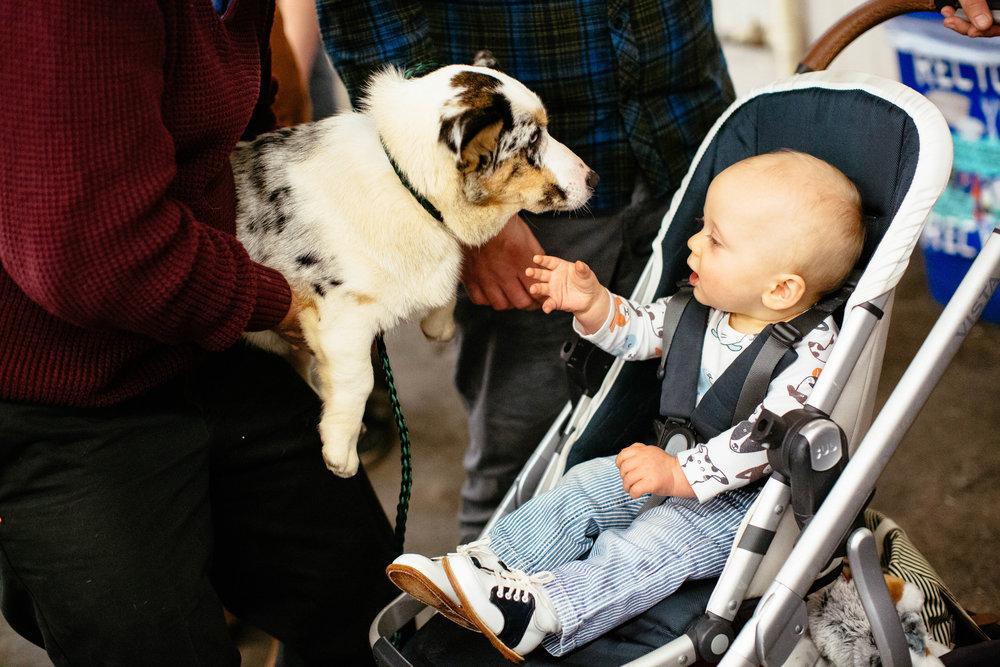 Dog Show SF-22.jpg