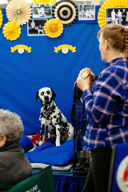 Dog Show SF-12.jpg