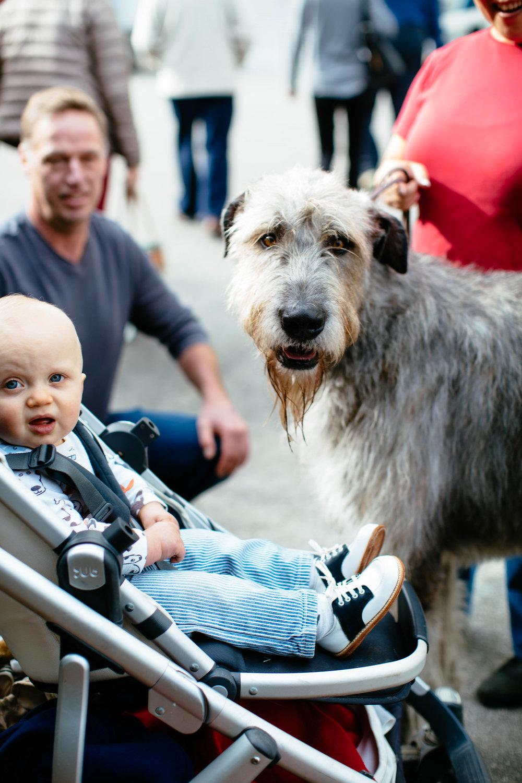 Dog Show SF-20.jpg