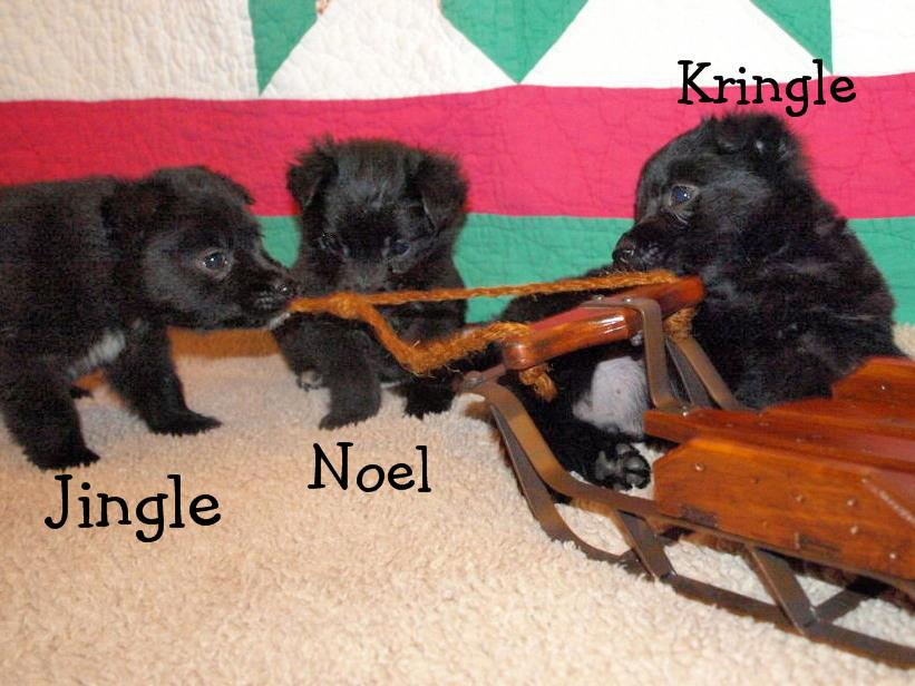 jingle-noel-kringle.jpg