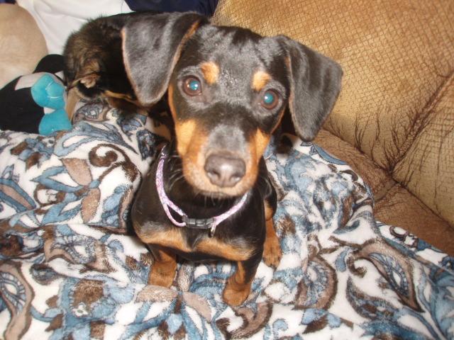 Penelope (Penny)