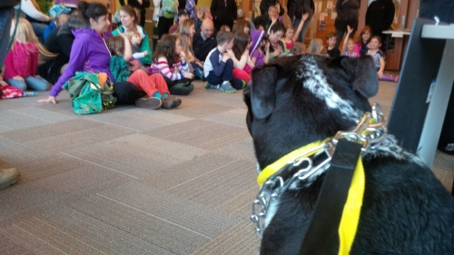 Yoda waits patiently to demonstrate the Yellow Leash Project.  A yellow leash or ribbon on a dog in public means the owner does not want you to approach their dog.  The dog could be aggressive, in training or ill.