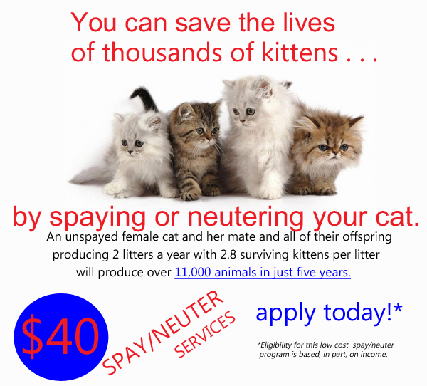 CATS1-web-ad.jpg