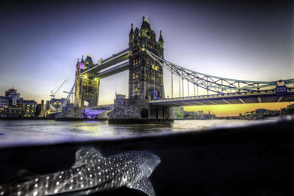 tower whale.jpg