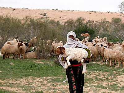 Shepherd-with-lamb-in-Negev-riverbed-tb-q010303
