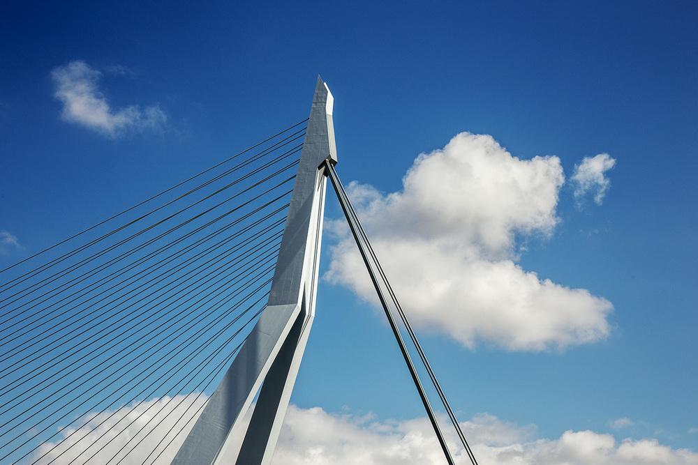 rotterdam+erasmus+bridge+swan.jpg