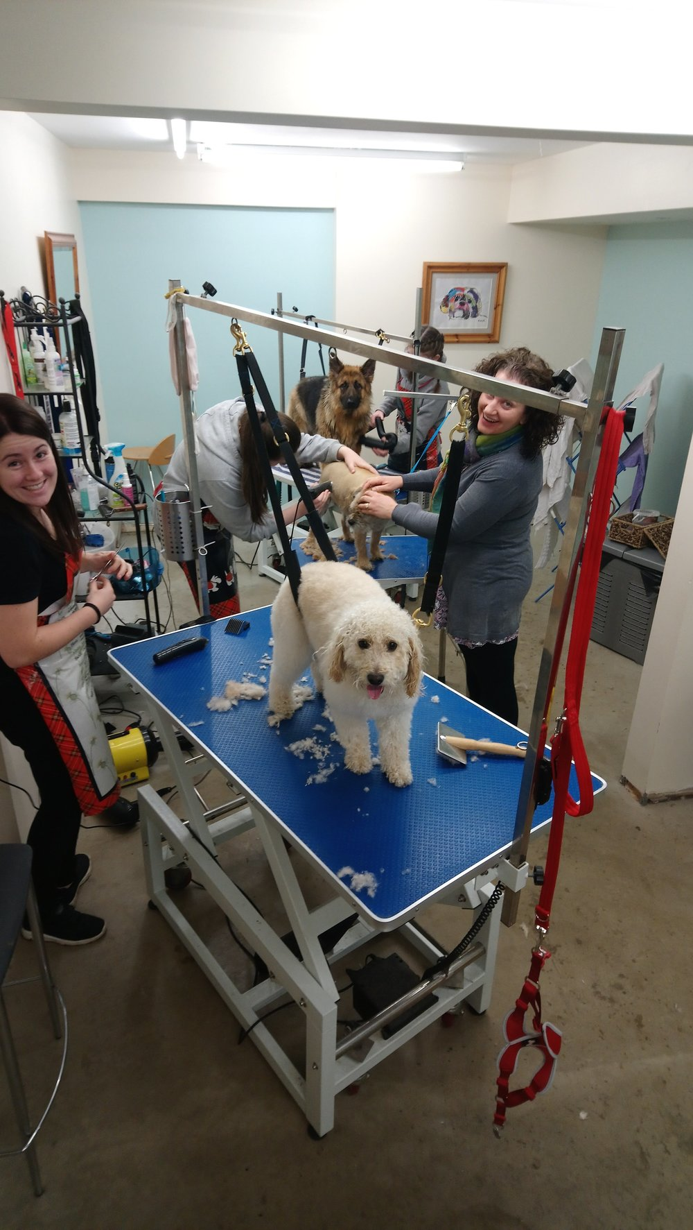 Drookit Dug Grooming Spa - .Click here to find out more
