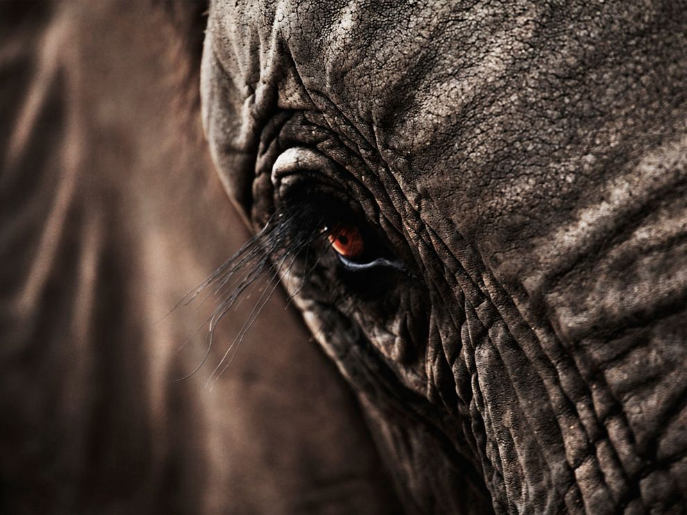 elephant-south-africa_35947_990x742.jpg