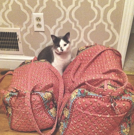 @jennykayc Bags are packed because today I get to see @laurenelizhook! #marywantstocome #sweetspots