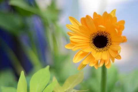 Photo courtesy of Flickr user http://www.flickr.com/photos/macsurak/