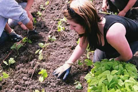 Backyard-farming-student-at-21-Acres.-farmstudent