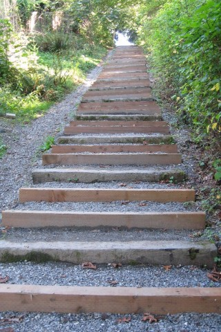 The new stairs in Cotton Hill Park