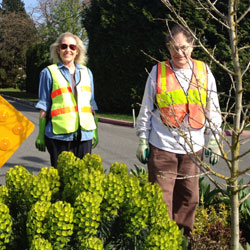18.  Community Stewardship  is alive and well in Kirkland with volunteers and organizations like Kudos Kirkland helping to beautify our neighborhoods.