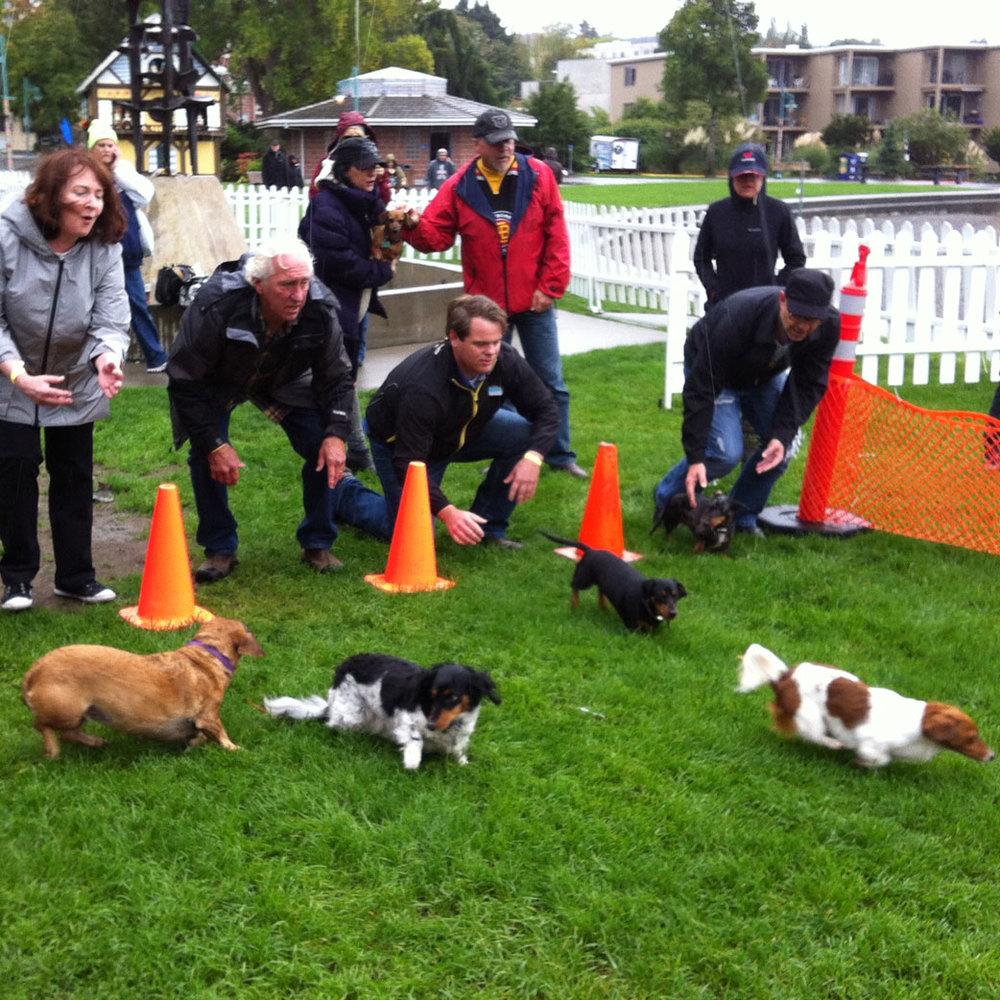 Weiner Dog Races at Kirkland Oktoberfest