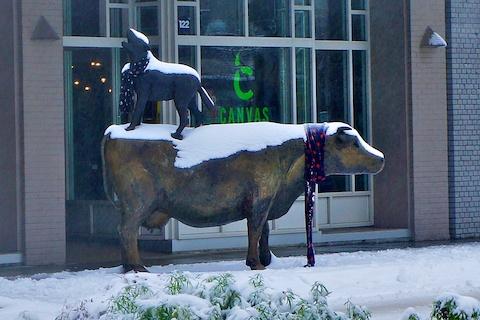 Cow & Coyote January.jpg
